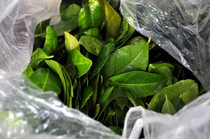 Lá chanh tươi - thứ nguyên liệu không thể thiếu khi ăn với gà luộc - rất phổ biến ở miền Bắc nhưng không dễ tìm ở Sài Gòn.