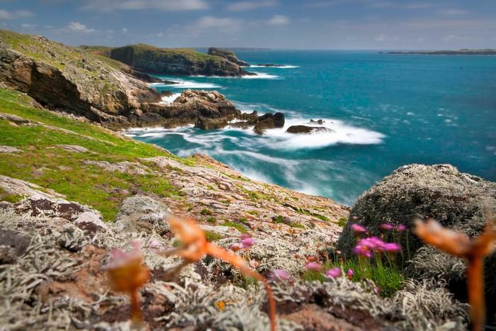 Hòn đảo Skomer với những sắc hoa lung linh