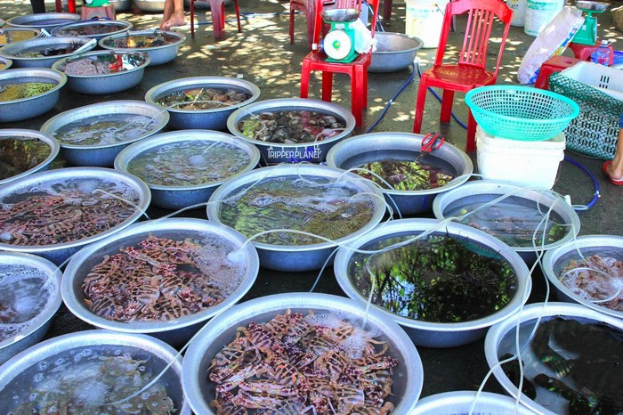 Hải sản tươi ngon bày bán ở chợ Cù Lao Chàm