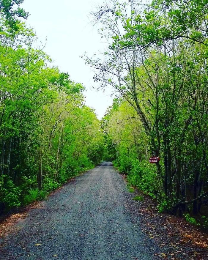 Con đường xanh ngát ngỡ như vùng quê nào đó - Ảnh: julylady.92