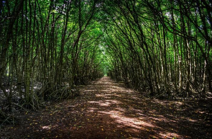 Khu rừng rợp bóng cây - Ảnh: James Sanders