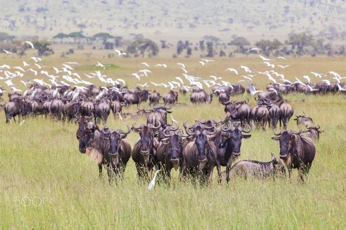 Nơi cư ngụ của hàng trăm loài động vật hoang dã