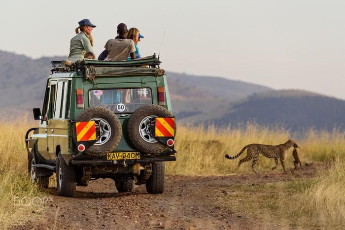 Du khách tới Maasai Mara sẽ có cơ hội được nhìn ngắm những những sinh vật hoang dã ở cự ly gần nhất