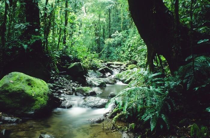 Một khu rừng rậm mà trước đây luôn khiến người ta phải rùng mình khi nghĩ tới