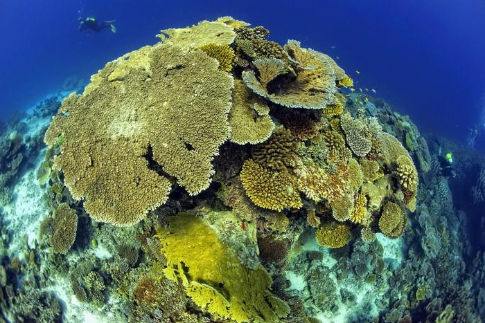 Nơi người ta có thể chiêm ngưỡng tận mắt một thế giới sống động của các loài sinh vật biển