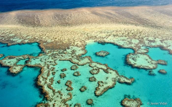 Khiến những rặng san hô có nguy cơ biến mất nếu không được bảo tồn