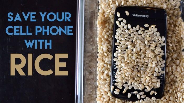 Nếu chẳng may rớt xuống nước, hãy bỏ vào hủ gạo để hút ẩm