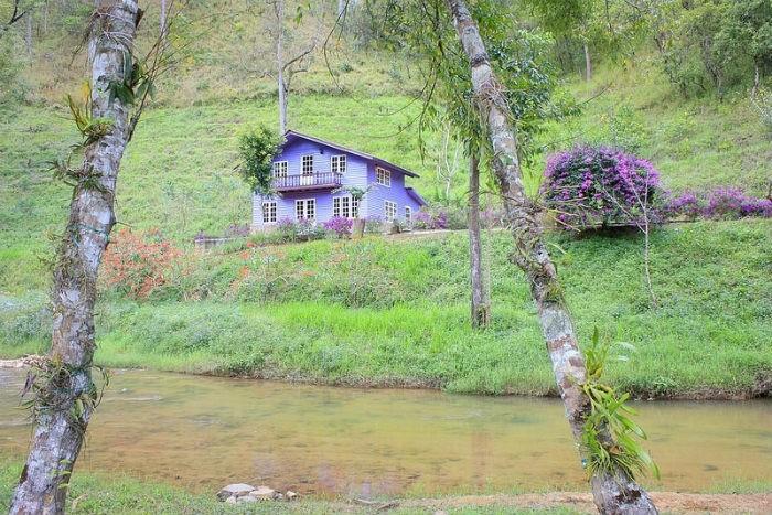 Ngôi nhà màu tím giữa rừng hoa sim tím rịm mơ màng