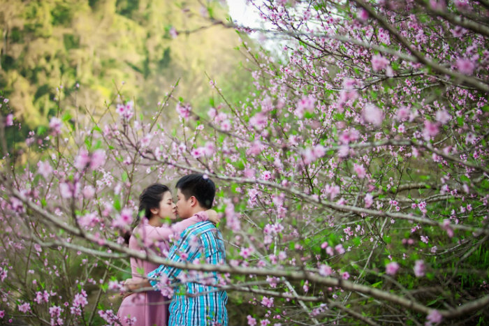 Thương nhau giữa mùa đào Mộc Châu