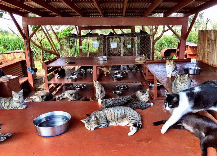 Khu nuôi mèo gọi là Lanai Cat Sanctuary, rộng khoảng 2.322 m2. Mèo không phải sống trong các lồng trại mà được tự do lang thang mọi nơi chúng muốn. Tuy nhiên nơi đây vẫn có các nhà gỗ nhỏ để mèo tránh mưa, gió.