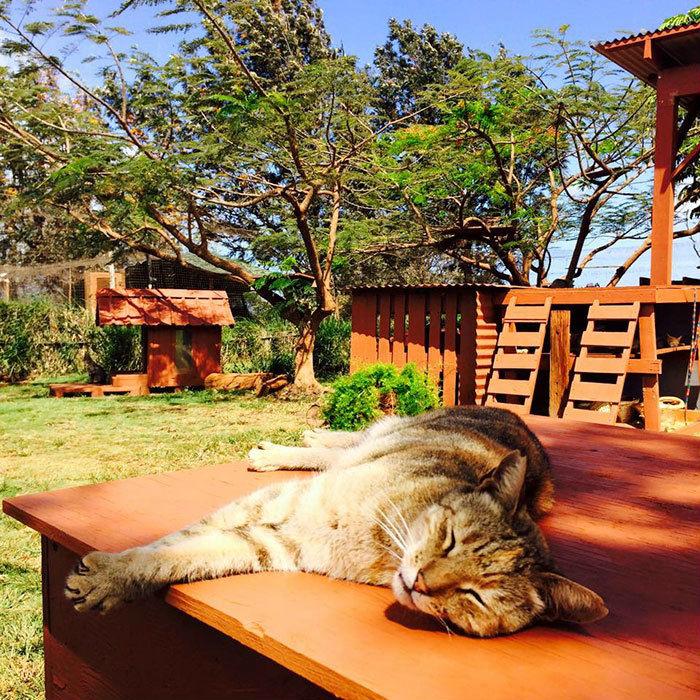 Thời gian tham quan, vui chơi, chăm sóc mèo là từ 10h tới 15h hàng ngày.