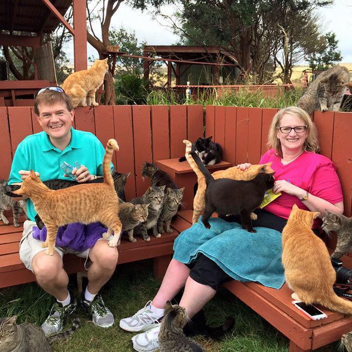 Những con mèo luôn sẵn lòng để du khách cưng nựng, vuốt ve hay cho ăn...