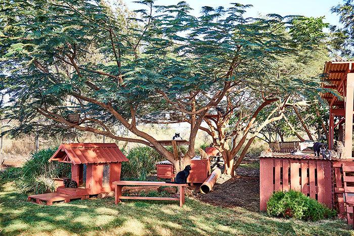 Lanai Cat Sanctuary do các tình nguyện viên và du khách gây dựng nên. Nơi đây còn kết hợp với khu nghỉ dưỡng Four Seasons tổ chức chương trình tình nguyện Pet and Purr cho những người yêu động vật từ khắp nơi trên thế giới tham gia.