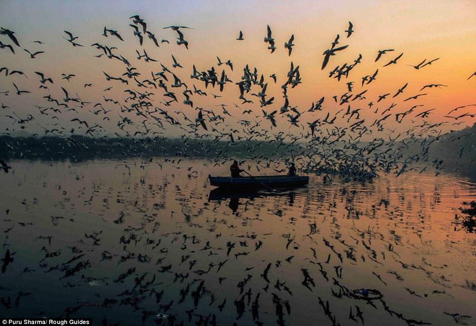 Nhiếp ảnh gia Puru Sharma lại ghi được khoảnh khắc đàn chim tung cánh bay trong ánh trời tàn, kết hợp với hình ảnh phản chiếu của mặt hồ càng tăng sức hấp dẫn cho bức ảnh.