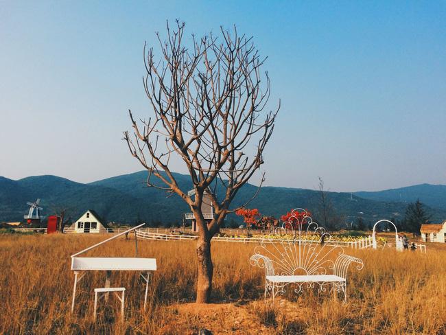 Thuận Phước Field -Phim trường chụp ảnh như Tây 1