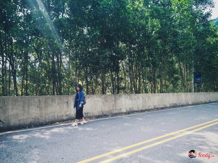Những hàng cây xanh mát bên đường