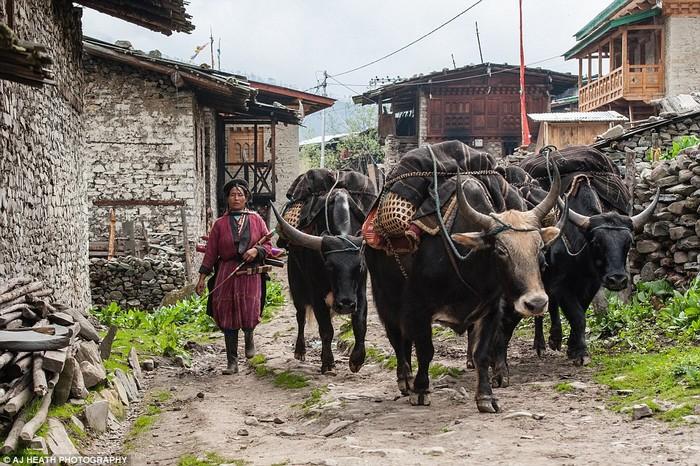 Cuộc sống của người Brokpa phụ thuộc rất nhiều vào các con vật họ nuôi. Trang phục họ mặc, mũ họ đội làm từ len của lông bò yak, kể cả chiếc lều của họ cũng từ làm bằng len, tuy càng ngày bạt nhựa càng được dùng nhiều hơn.
