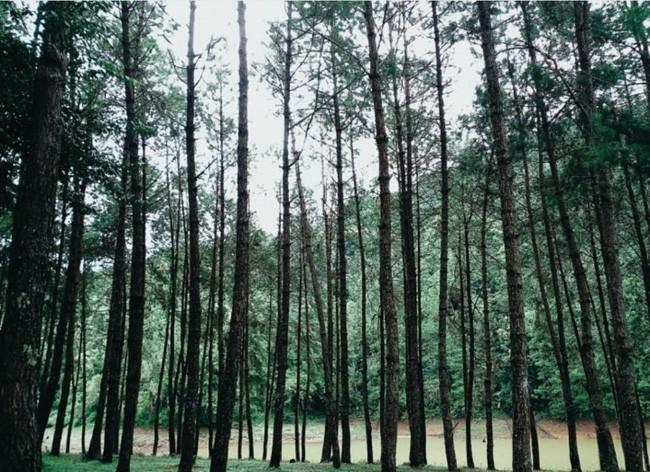Đi Thái không chỉ có Bangkok hay biển, còn cả một miền Bắc xanh tươi rừng núi đang chờ bạn - Ảnh 24.