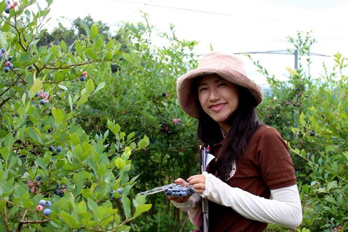 Việt quất mang về được đựng trong từng hộp nhỏ, được khoảng 100 gram, giá 220 yen (gần 50.000 đồng)