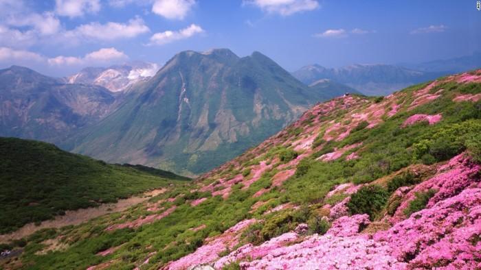 Dãy núi Kuju được bao phủ bởi các thảm hoa đỗ quyên màu hồng rực rỡ.