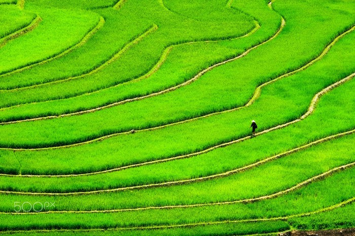 Mù Cang Chải lúa xanh mướt những ngày hạ