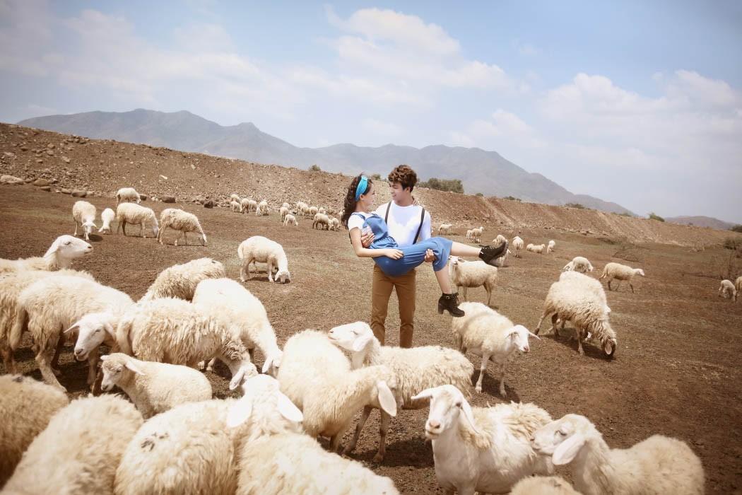 Khoảnh khắc ngọt ngào, lãng mạn của đôi lứa cùng đàn cừu