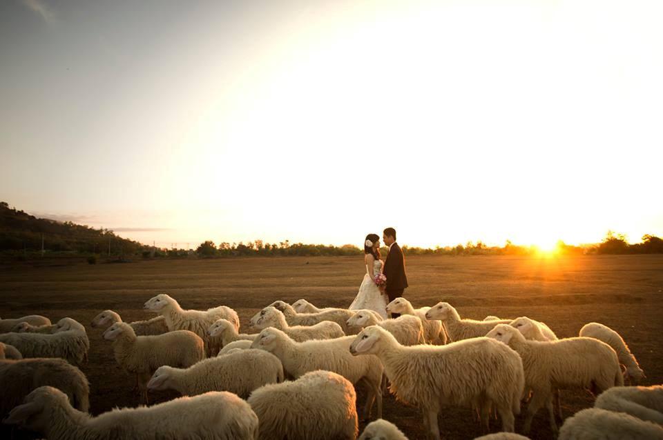 Bình minh, đàn cừu và tình yêu đôi lứa hòa quyện trong cùng shoot ảnh
