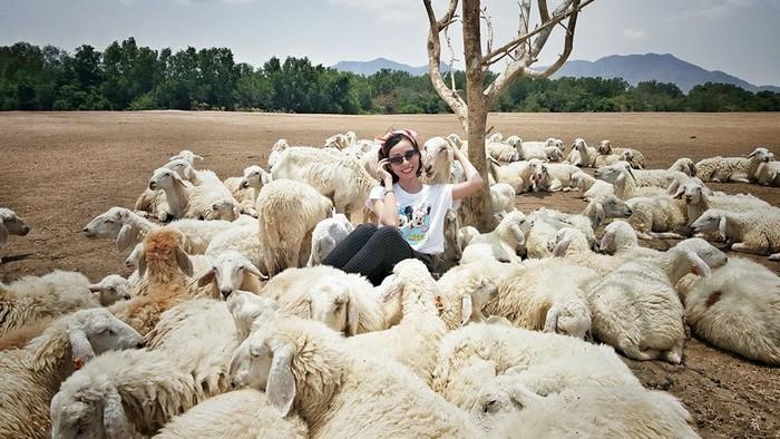 Thỏa thích chụp ảnh cùng đàn cừu