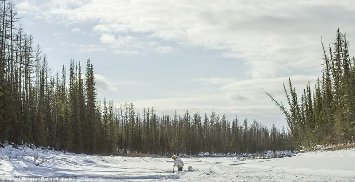 Năm 2014, Maxsimovic giết được 23 con chó sói, nhiều hơn các thợ săn khác và đã giành được giải thưởng trị giá gần 4.600 USD cùng một chiếc xe trượt tuyết.