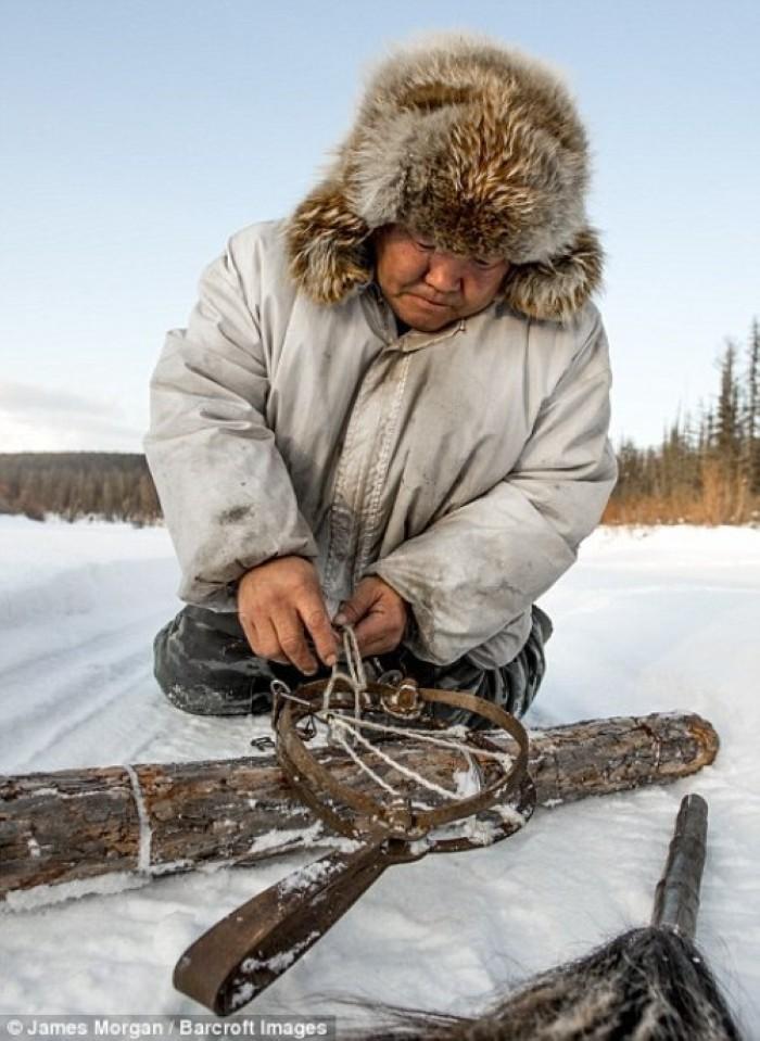 Maxsimovic đang chuẩn bị đồ nghề làm bẫy chó sói.