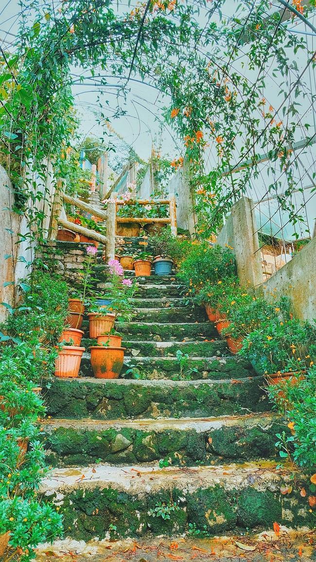 Những góc vườn xinh xắn mà Phương tìm được khi lang thang quanh đồi.