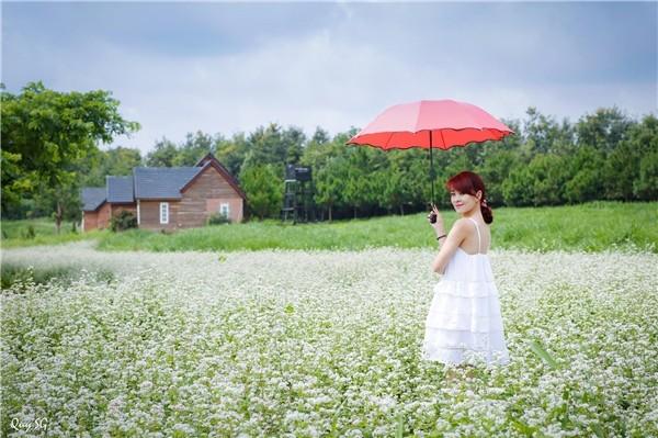 Du khách chụp ảnh cùng cánh đồng hoa