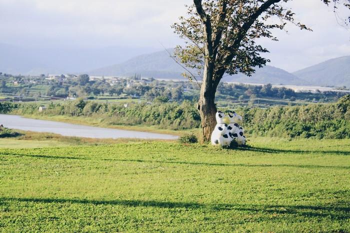 Cảnh quan xanh mát tự nhiên