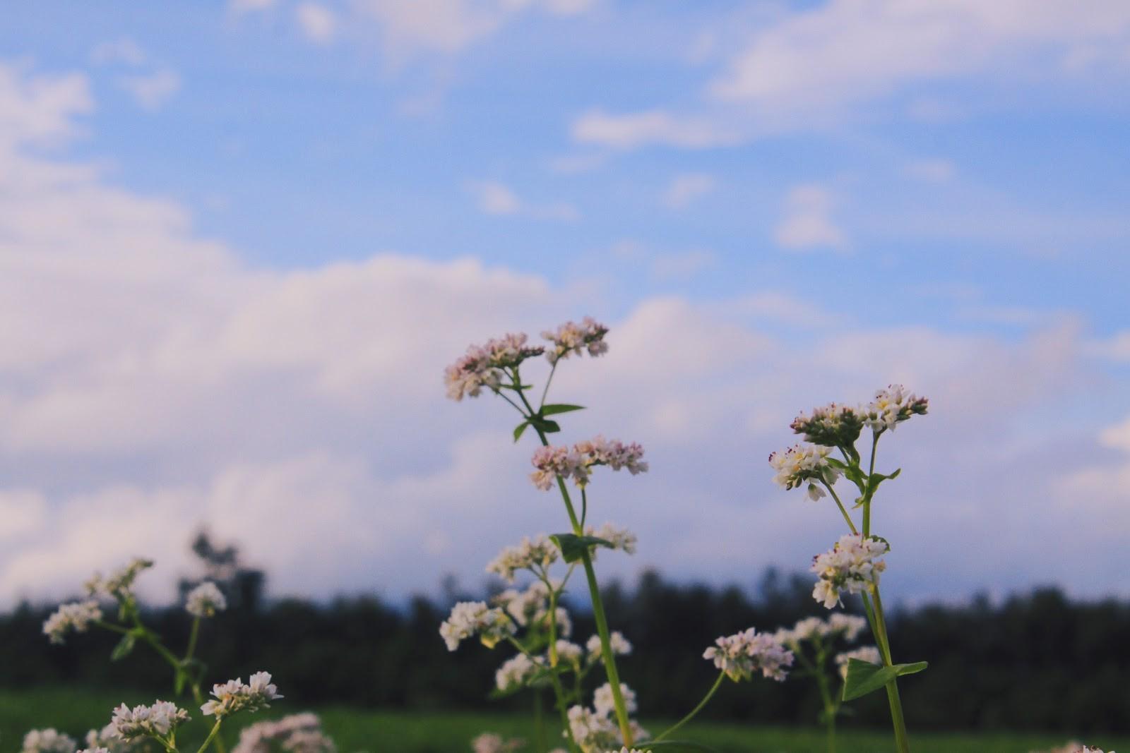Loài hoa mong manh nhưng có sức hấp dẫn kỳ lạ