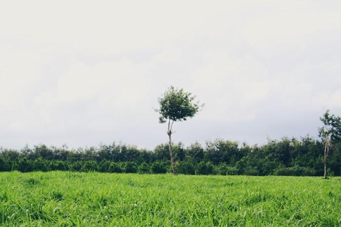 Một góc xanh xanh đáng yêu ở trang trại