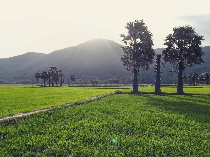 Cánh đồng Tà Pạ mùa lúa xanh- Ảnh: bem_lephuong