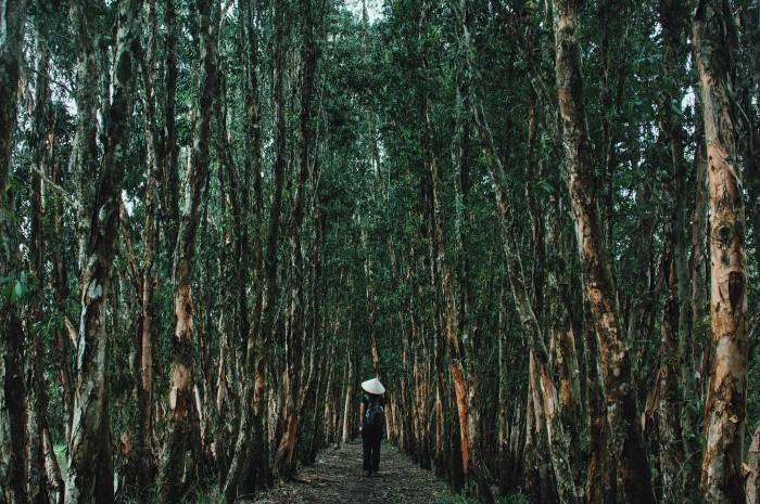 Ma mị màu rừng tràm Trà Sư- Ảnh kirakirawes