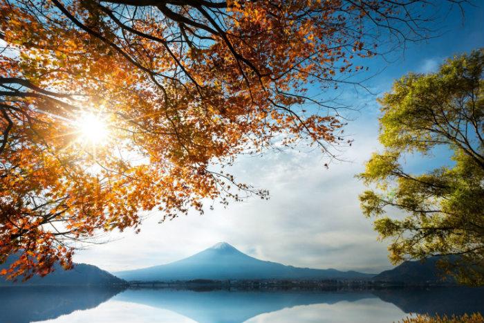Vương quốc phù tang như dành riêng cho người tuổi Tuất trong 2016