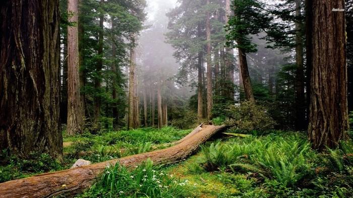 Công viên quốc gia Rừng Redwood, bang California, Mỹ