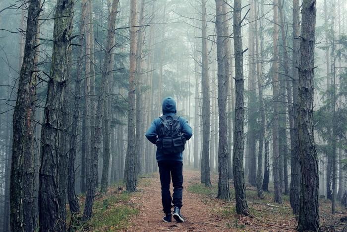 Nếu đủ sức hãy quay lại đường cũ để thoát khỏi khu rừng