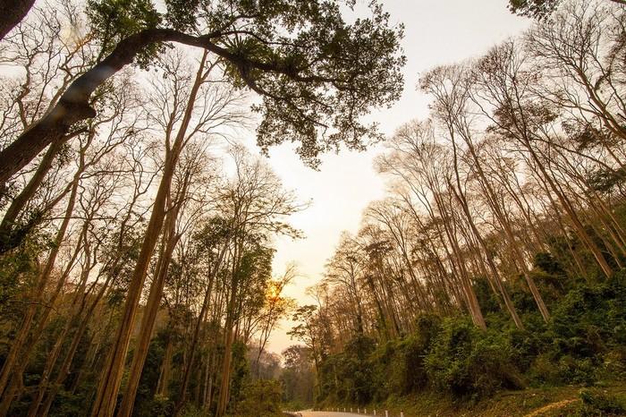 Khung cảnh lãng mạn như ở phương Tây của khu rừng săng lẻ tại Nghệ An