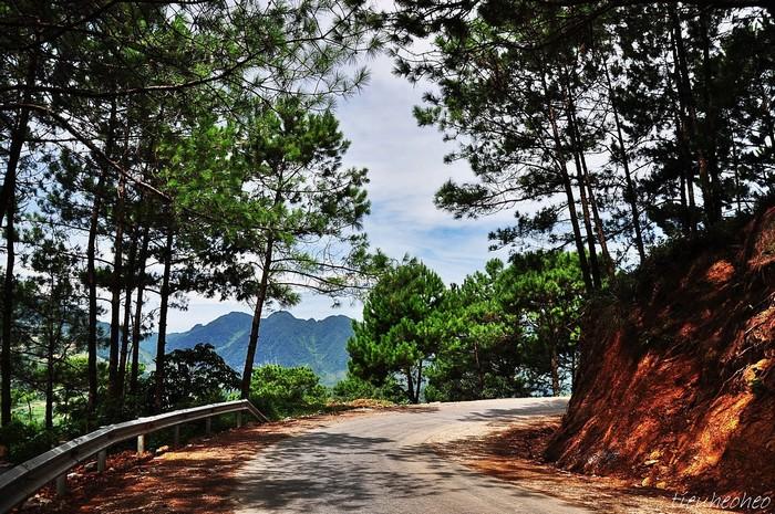 Qua rừng thông Yên Minh
