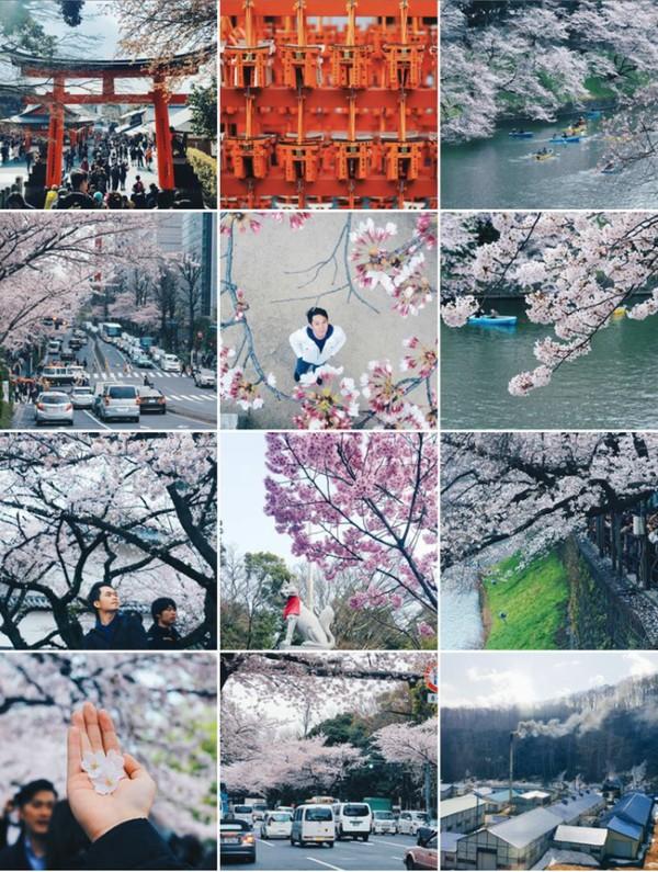 """Chuyến """"săn hoa"""" ở đất nước vạn cái đẹp Nhật Bản"""