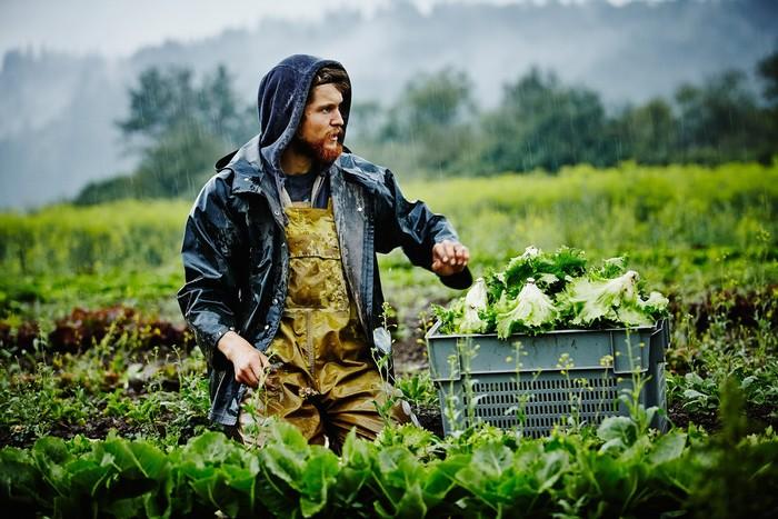 Làm việc ở trang trại là một trong những công việc phổ biến nhất