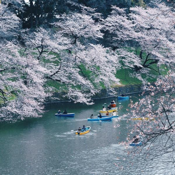 Chèo thuyền dọc sông ngắm hoa -