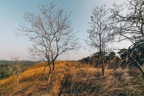 Đồng cỏ cháy với những cành cây mùa rụng lá