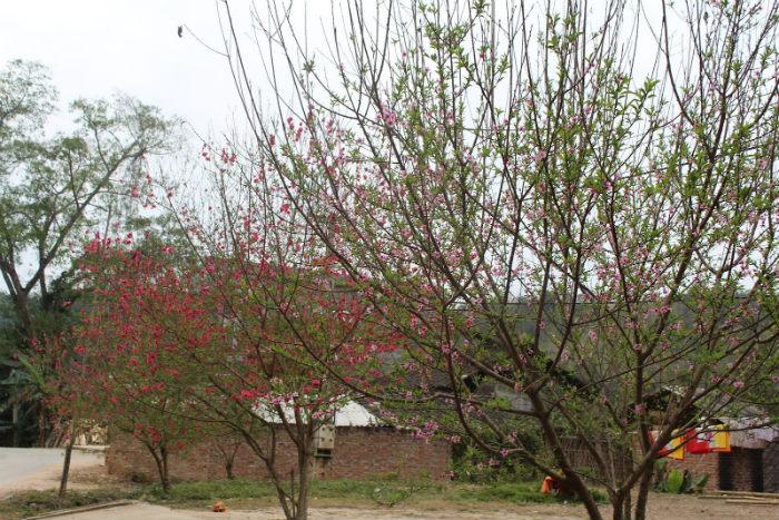 Cao Bằng mùa xuân