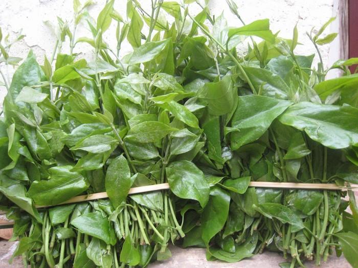 Những món rau rừng Cao Bằng sẽ khiến bạn ăn một lần là nhớ mãi