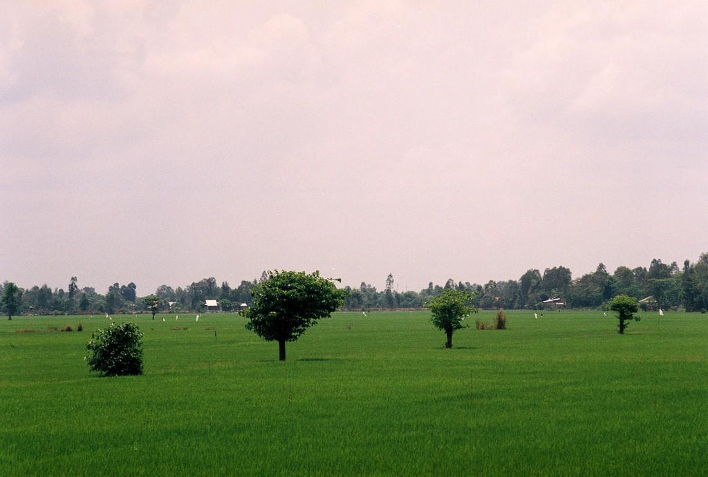 Khách du lịch Gáo Giồng có dịp thưởng ngoạn bức tranh cánh đồng quê bát ngát