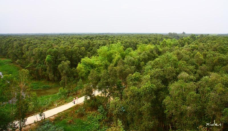 Băng trên lối đi được che chở bởi rừng xanh Gáo Giồng